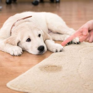 Pet spills and stains
